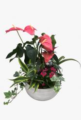 XL White wash Anthurium Planter  Tropical