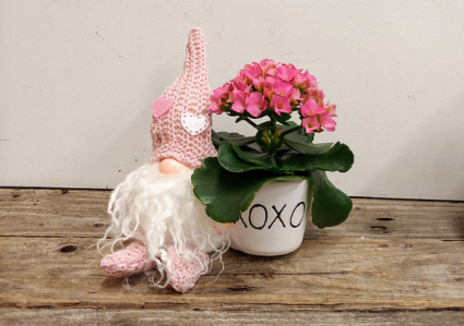 X&O Gnome with Kalanchoe Potted plant