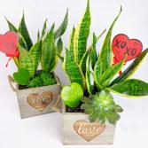XOXO & LOVE Planter Custom