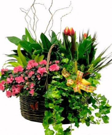 Xtra large Garden Basket