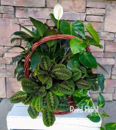 XXL Plant Basket