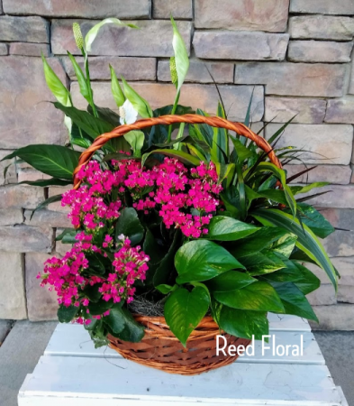 XXL Plant & Blooming Basket