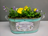 Yellow and lavender violas in cute tin Outdoor plant
