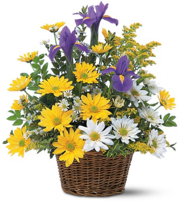 Yellow and White Daisies anris in basket