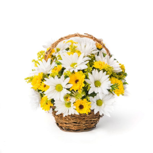 Yellow and White Daisies Arrangement in a Basket in Lebanon, NH | LEBANON GARDEN OF EDEN FLORAL SHOP