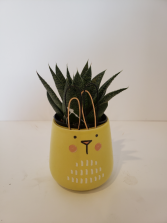 Yellow bunny pot with succulent  Plant
