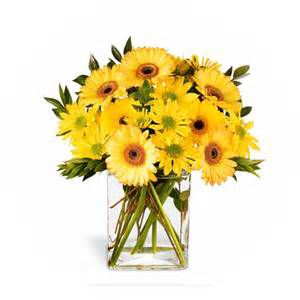 Yellow Delight Gerbera & Daisys in Colorado Springs, CO   ENCHANTED FLORIST II
