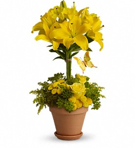 Yellow Fellow - 561 Arrangement