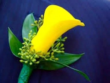 YELLOW MINI CALLA LILY