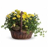 Yellow Plant Basket Plants