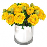 Yellow ranunculus  Spring flower