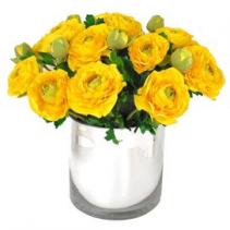 Yellow ranunculus  Spring flower