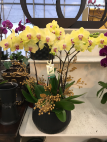 Yellow & red Orchids