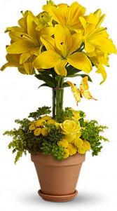 Yellow Topiary Arrangement
