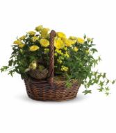 Yellow Trio Basket H941A