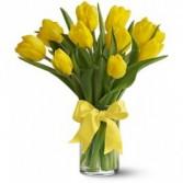 Yellow Tulips                         vased