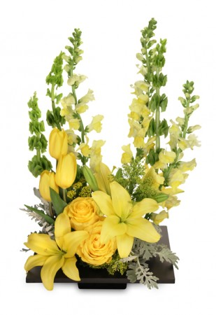 YOLO Yellow Arrangement