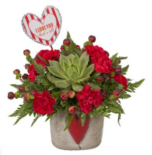 You Rock Bouquet Keep and grow your echeveria!!  in Balsam Lake, WI | BALSAM LAKE PRO-LAWN INC.