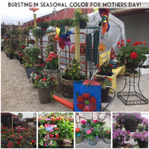 Your Garden Store and So Much More Give the gift of gardening  in Pelican Rapids, MN | Brown Eyed Susans Floral