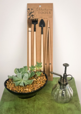 Zen Garden Black Plant Kit