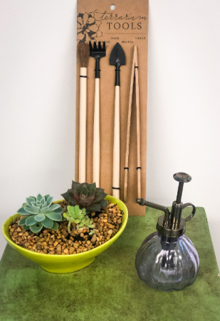 Zen Garden Green Plant Kit