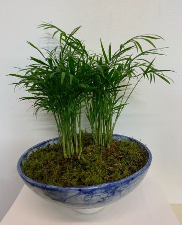 Zen Palm planter