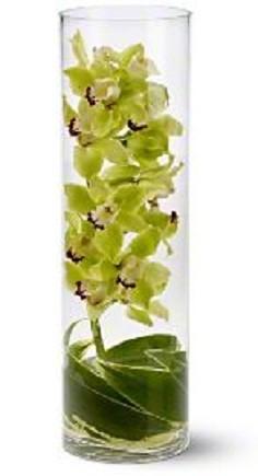 Zensational Flowers Orchid Arrangement