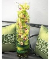 Zensational Orchid Arrangement by Enchanted Florist