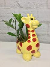 ZZ Giraffe  Zanzibar Gem