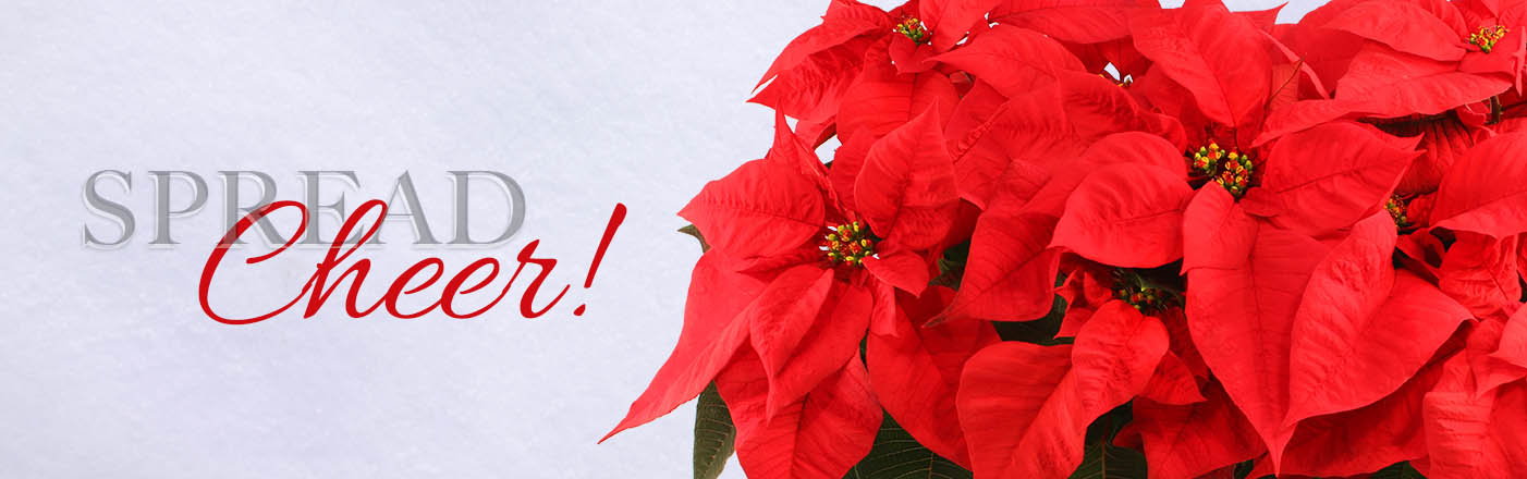 Shop Christmas Flowers Now!